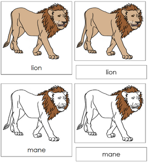 Lion Nomenclature Cards - Montessori