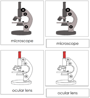 Microscope Nomenclature Cards - Montessori