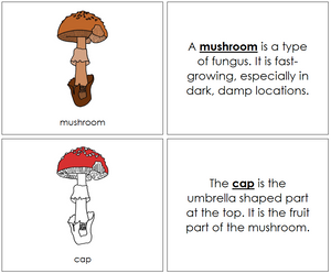 Mushroom Nomenclature Book (red) - Montessori Print Shop
