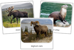 North American Wildlife Safari Toob Cards - Montessori Print Shop
