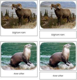 North American Wildlife - Safari Toob Cards