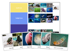 Ocean Zones and Animals - Montessori Print Shop zoology materials