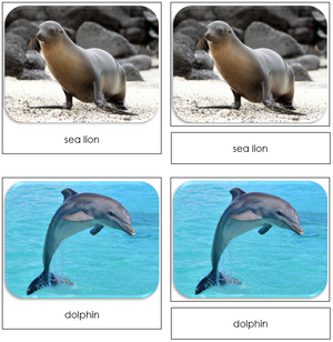 Ocean - Safari Toob Cards