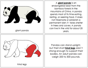 Giant Panda Nomenclature Book - Montessori