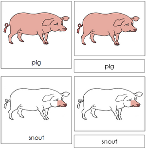 Pig Nomenclature Cards - Montessori
