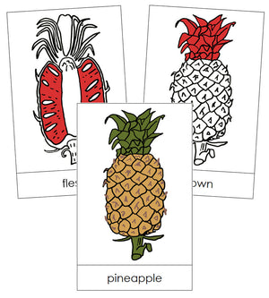 Pineapple Nomenclature Cards (Red) - Montessori Print Shop