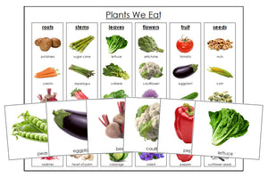 Plants We Eat Sorting Cards & Chart - Montessori Print Shop science