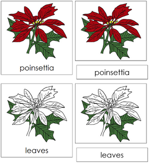 Poinsettia Nomenclature 3-Part Cards - Montessori Print Shop