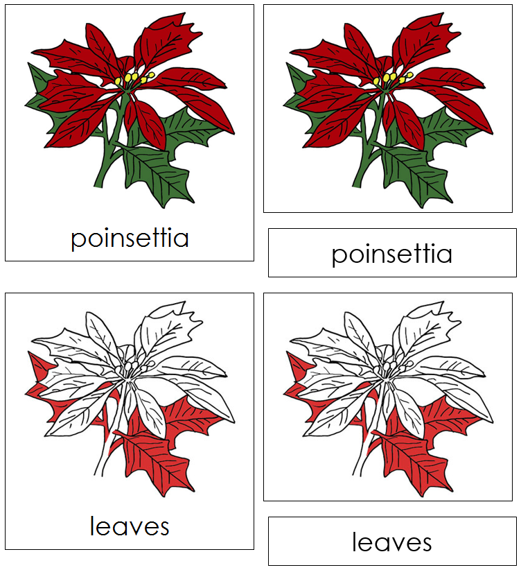 Poinsettia Nomenclature Cards (red) - Montessori Print Shop