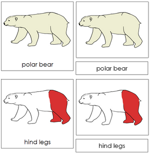 Polar Bear Nomenclature Cards (red) - Montessori Print Shop