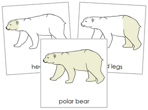 Polar Bear Nomenclature Cards - Montessori Print Shop