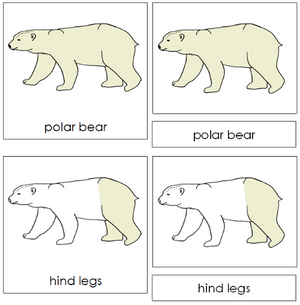Polar Bear Nomenclature 3-Part Cards - Montessori Print Shop