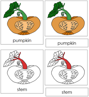 Pumpkin Nomenclature 3-Part Cards (red) - Montessori Print Shop