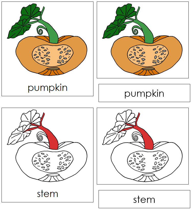 Pumpkin Nomenclature Cards (red) - Montessori Print Shop