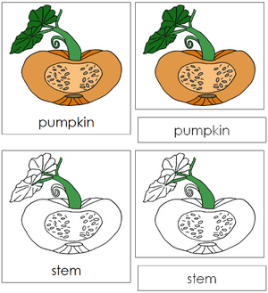 Pumpkin Nomenclature 3-Part Cards - Montessori Print Shop