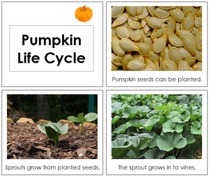 Pumpkin Life Cycle Book - Toddler - Montessori Print Shop
