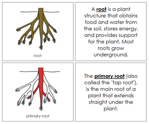 Root Nomenclature Book (red) - Montessori Print Shop