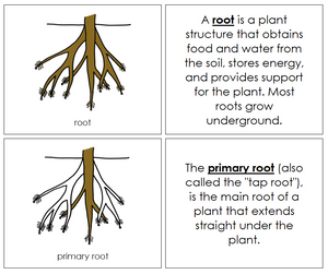 Root Nomenclature Book - Montessori Print Shop