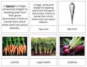Plant Roots - Montessori Print Shop botany cards