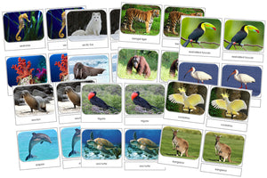 Safari Toob Cards Bundle - Montessori Print Shop