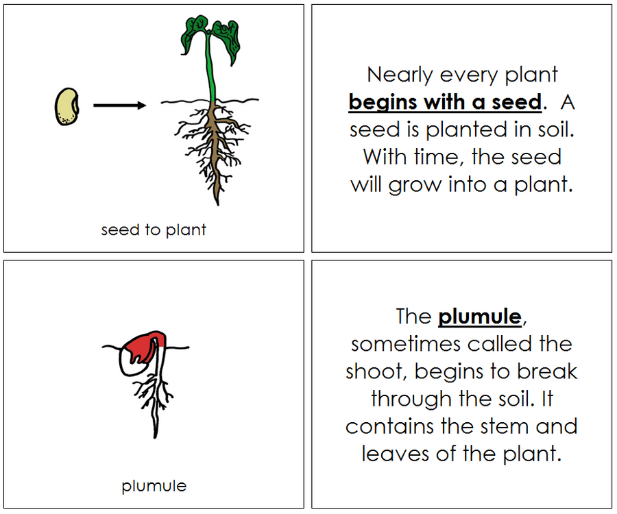 Seed to Plant Nomenclature Book (red) - Montessori Print shop