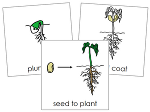 Seed to Plant Nomenclature Cards - Montessori Print Shop