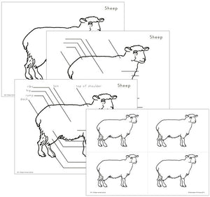 Elementary Sheep Nomenclature - Montessori Print Shop