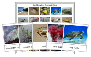 Shoreline Animals & Plants - Montessori Print Shop