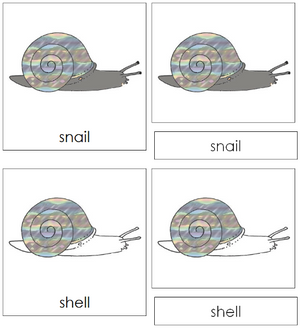 Snail Nomenclature Cards - Montessori