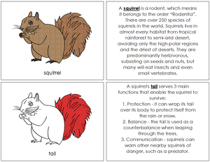 Squirrel Nomenclature Book (red) - Montessori Print Shop