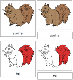 Squirrel Nomenclature Cards (red) - Montessori Print Shop