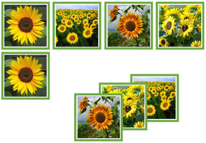 sunflower matching cards - Montessori Print Shop