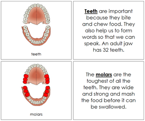 Teeth/Jaw Nomenclature Book - Montessori Print Shop