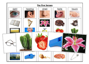 The Five Senses Chart and Cards - Montessori Print Shop