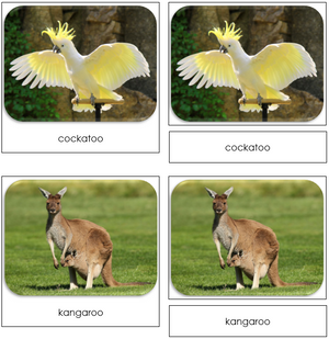 The Land Down Under - Safari Toob Cards