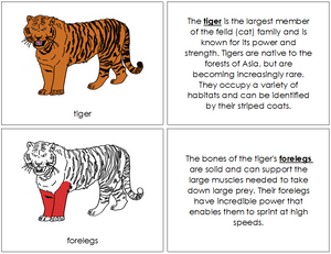 Tiger Nomenclature Book (red) - Montessori Print Shop