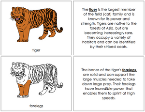 Tiger Nomenclature Book - Montessori Print Shop