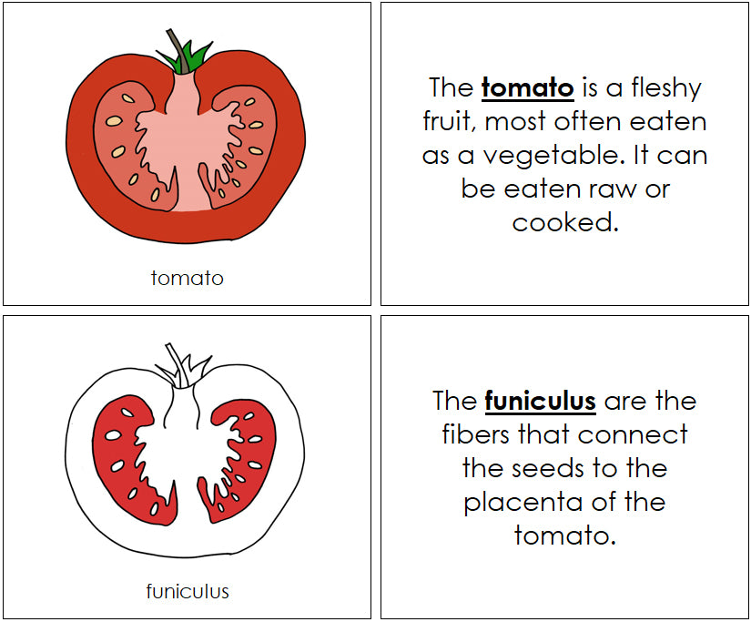 Tomato Nomenclature Book (Red) - Montessori Print Shop