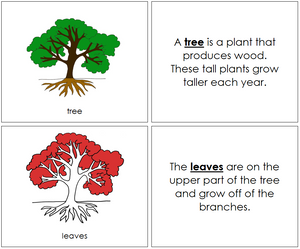 Tree Nomenclature Book (red) - Montessori Print Shop