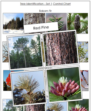 Tree Identification Cards Set 1 - Montessori Print Shop