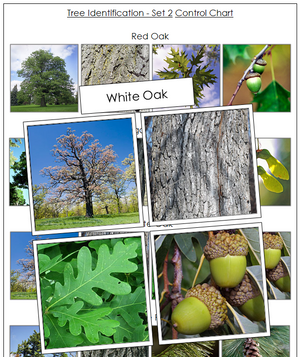 Tree Identification Cards Set 2 - Montessori Print Shop