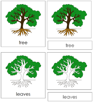 Tree Nomenclature 3-Part Cards - Montessori Print Shop
