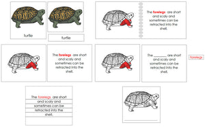5-Part Turtle Nomenclature Definition Set - Montessori Print Shop