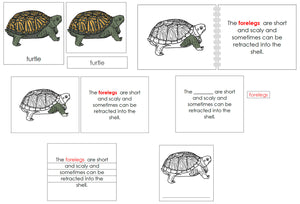 Turtle Definition Set - Montessori Print Shop nomenclature
