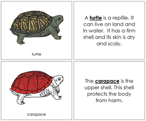 Turtle Nomenclature Book (red) - Montessori Print Shop