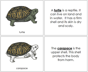 Turtle Nomenclature Book - Montessori Print Shop