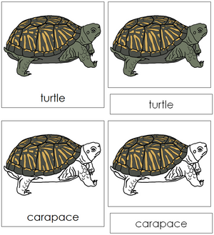 Turtle Nomenclature Cards - Montessori