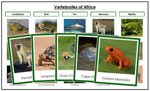 Africa Vertebrate Sorting Cards (color borders) - Montessori Print Shop