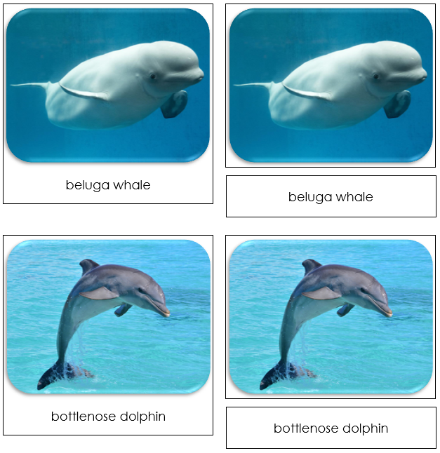 Whales and Dolphins Safari Toob Cards - Montessori Print Shop
