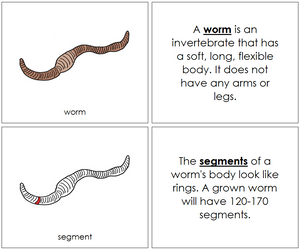 Worm Nomenclature Book (red) - Montessori Print Shop
